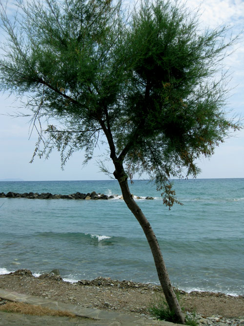 Pioppi, spiaggia