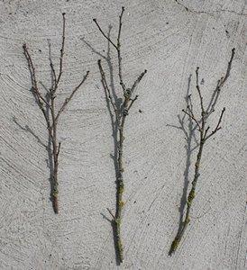 Ramoscelli per fare gli alberi per il presepe